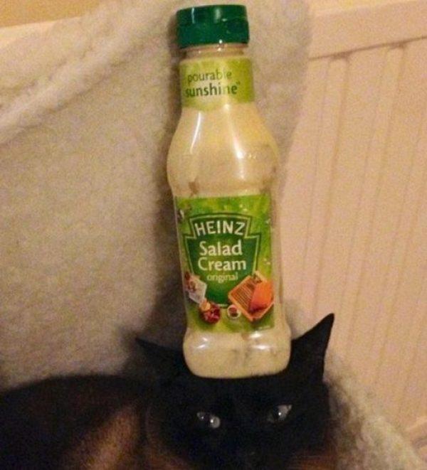 Cat Balancing Salad Cream Bottle on Its Head