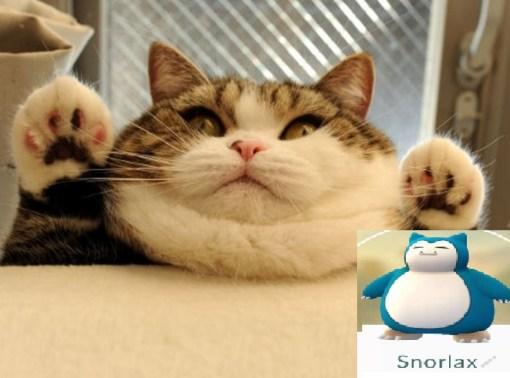 Cat Looks Like a Snorlax