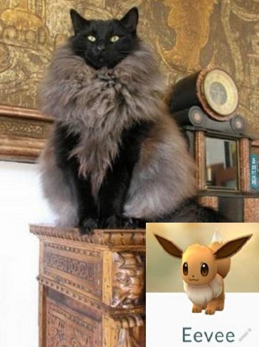 Cat Looks Like an Eevee