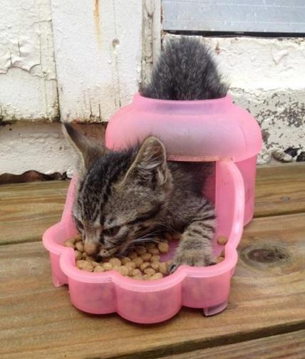 Cat Eating the Wrong Way