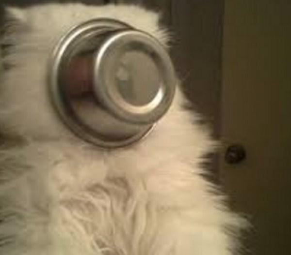 Cat Food Bowl Stuck on Head