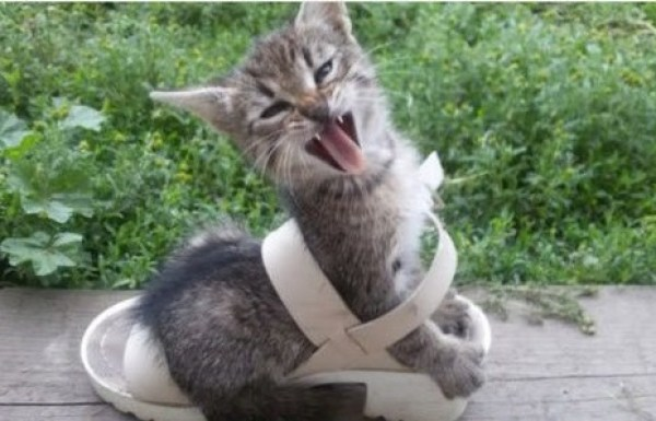 Cat Tangled Up in a Shoe