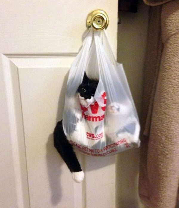 Cat Tangled Up in a Bag of Socks