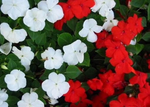 Most Popular Flowers the 10 most popular flowers grown in the uk