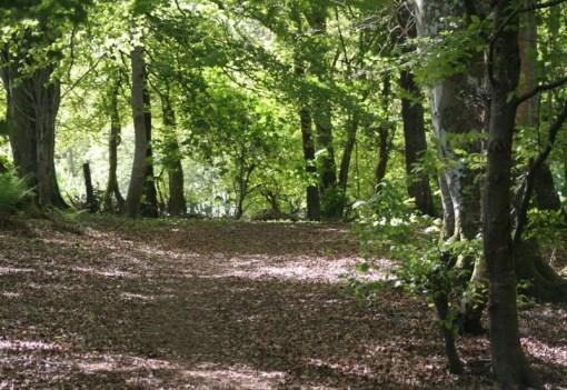 Dornoch Forest, Scotland