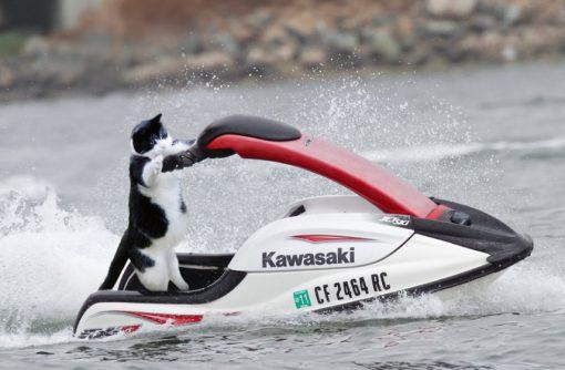 Jet Ski Cat