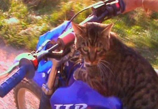 Dirt Bike Cat