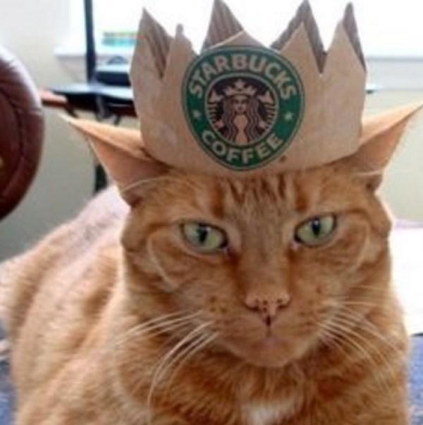 Starbucks Cat Costume
