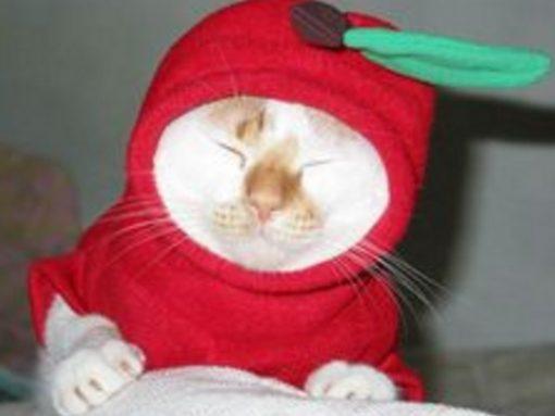 Red Delicious Cat Costume