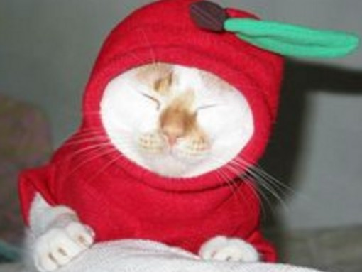 Red Delicious Cat Costume