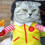 Top 10 Corporate Loving Brand Name Cat Costumes