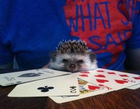 Hedgehog Playing Poker