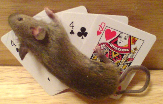 Mouse Playing Poker