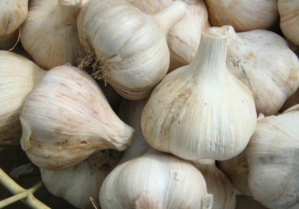 Garlic (Alliumphobia)