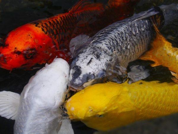 Fish (Ichthyophobia)