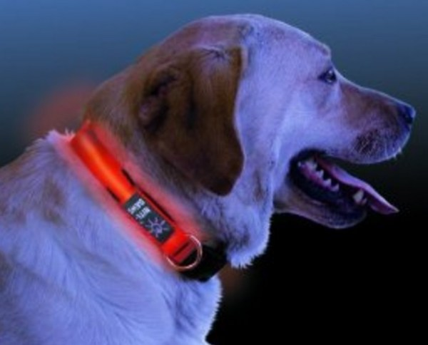 Reflective Dog Collars