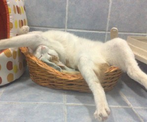 Ten Cats Sleeping in Strange and Uncomfortable Positions