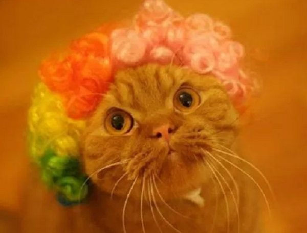 Ten Cats Wearing the Craziest Wigs You Will Ever See