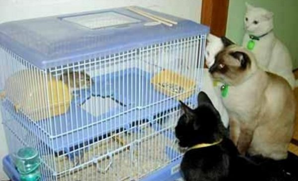Ten Crazy Cats Who Think They Are Hamsters