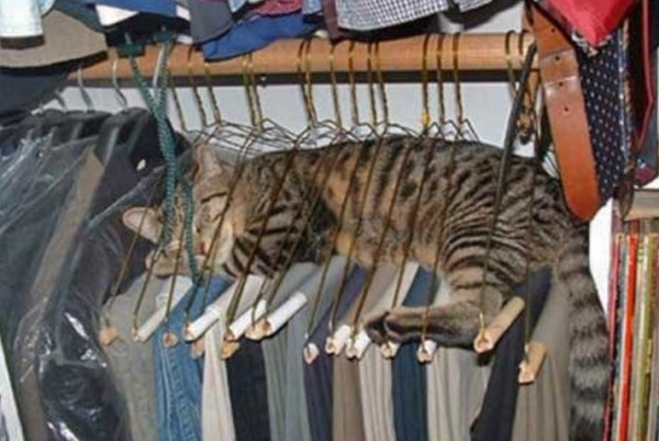 Cat Asleep in Coat Hangers