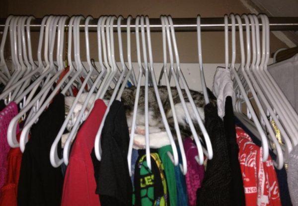 Cat Asleep in Coat Hangers
