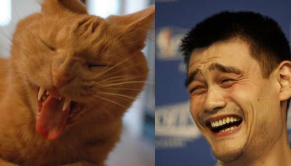 Yao Ming Face