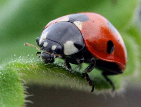 Ladybird Landing on You