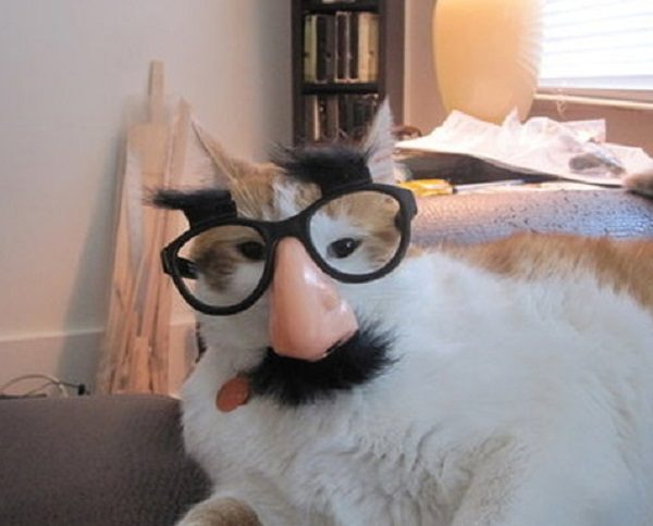 Cat Wearing Crazy Glasses