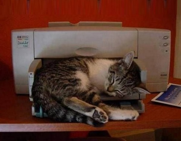 Cat Getting in the Way of Printing Work Out