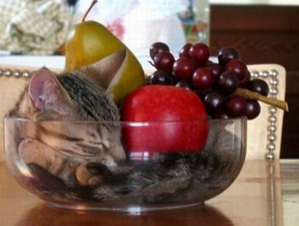 Cat in Fruit Bowl
