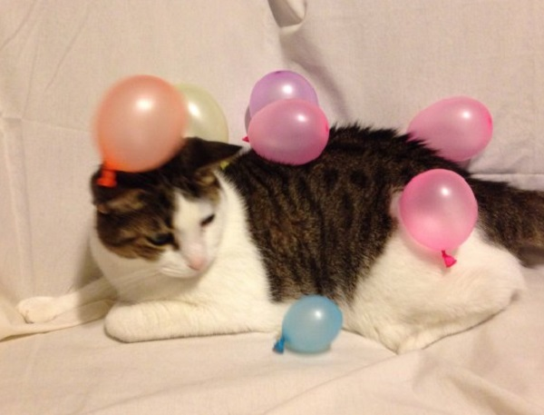 Cat Covered in Balloons