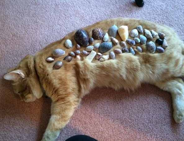 Cat Covered in Seashells