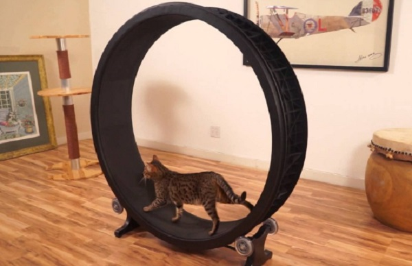 Treadmill for Cats
