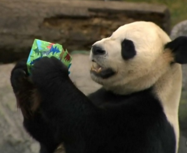 Ten Amazing and Unusual Gift Ideas for People Who Love Pandas