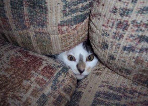 Cat in a Sofa