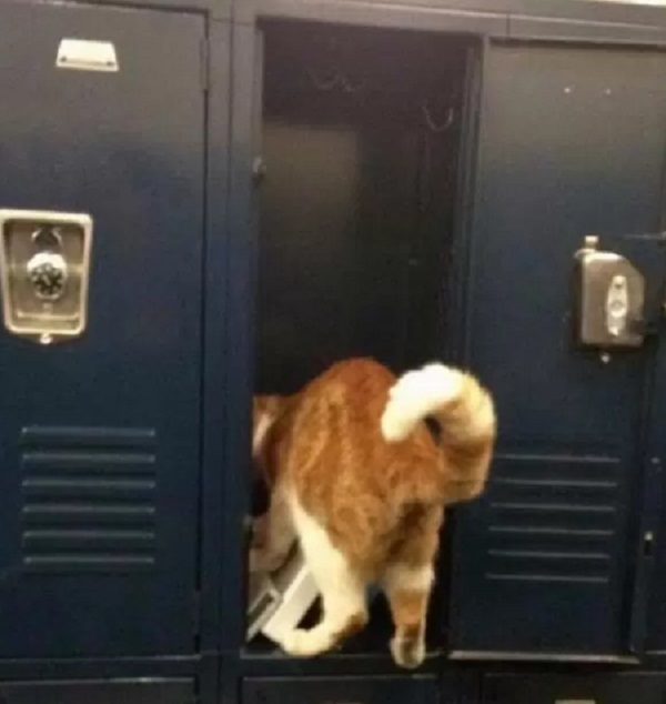 Cat at School