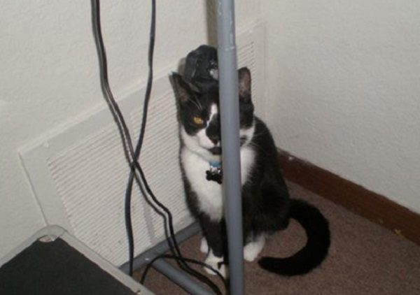 Cat Hiding Behind Pole