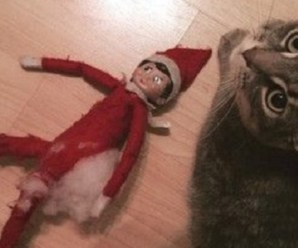 Ten Christmas Cats Who Give Their Opinion On the Elf on the Shelf