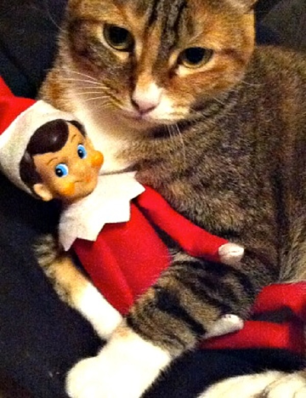 This Cat Loves the Elf on the Shelf