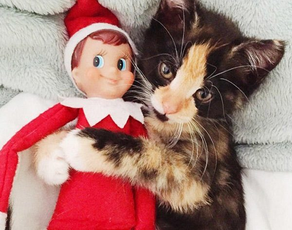 This Cat Thinks the Elf on the Shelf Is Huggable