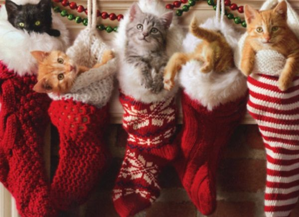 Cats in Christmas Stockings