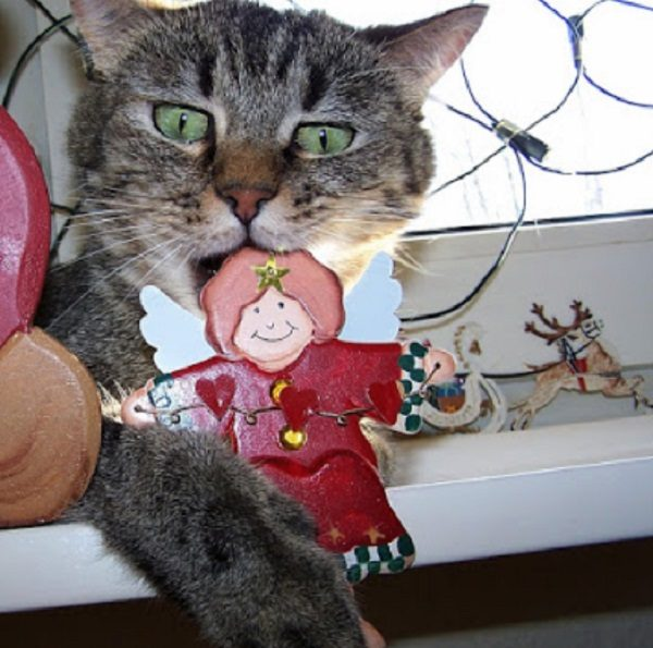 Cat Destroying Christmas Decorations