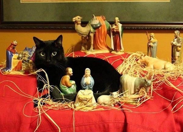Cat Destroying Nativity Scene