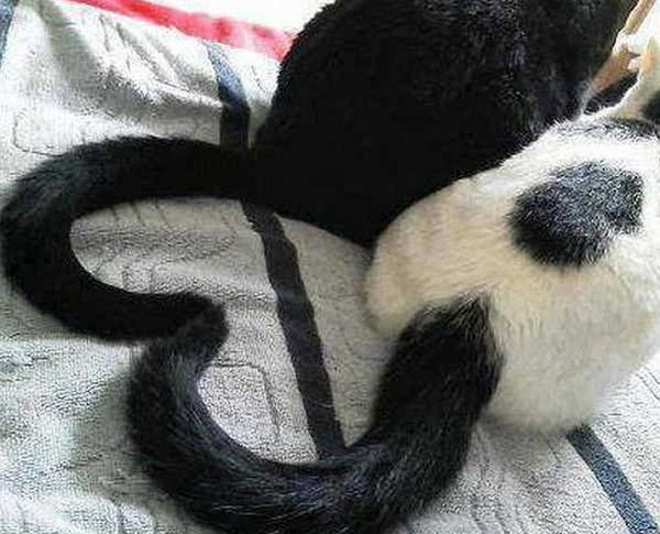 Ten Cats Who Have Suddenly Discovered the Joy of Having a Tail