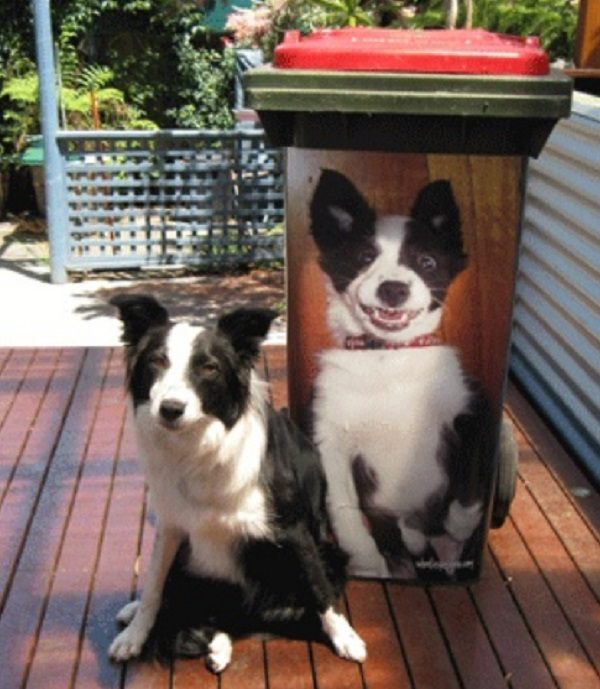 Pet Photo Wheelie Bin Stickers