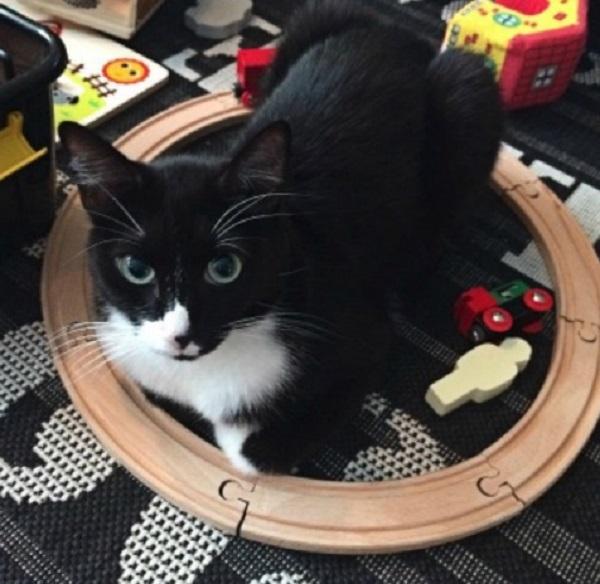 Cat in a Circle