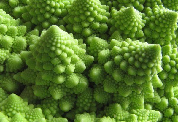 Romanesco Cauliflower (Brassica oleracea)