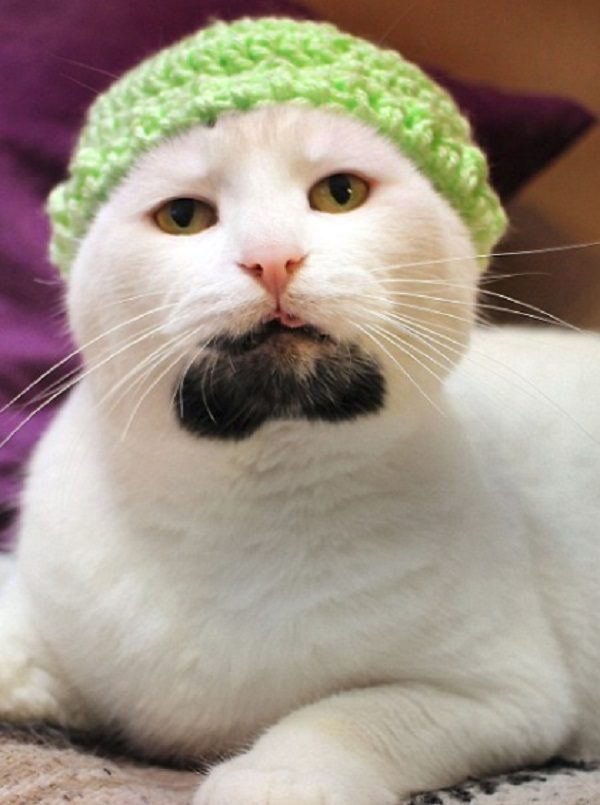 Cat With Well Groomed Goatee