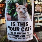 Ten Missing Cats Who Are Not Missing at All!