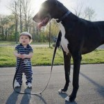 The Top 10 Biggest Breeds of Dogs You Can Have as a Pet
